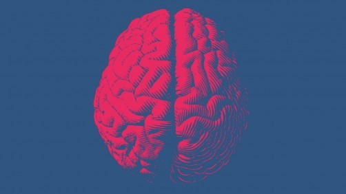 A new glutamate-sensing material could lead to new insights into the workings of the human brain. Credit: (Image by Shutterstock / Jolygon.)